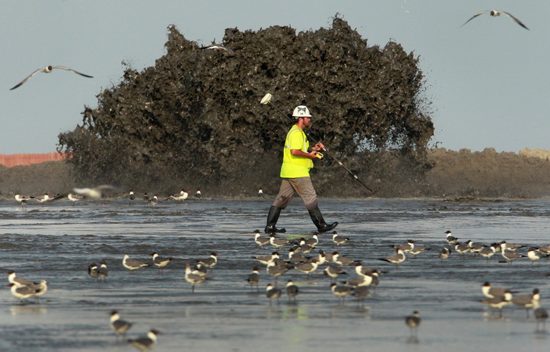 Последствия разлива нефти в мексиканском заливе